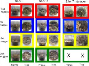 Jamförelse av muggar längs tiden (från dag 1 till 7 månader efter).